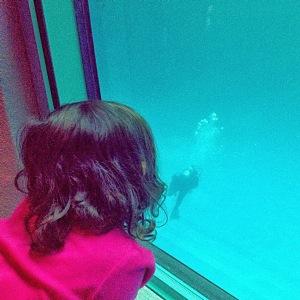 Jana even found a Scuba Diver in the Beluga Whale tank!