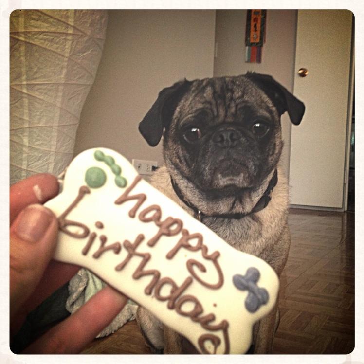 Happy Birthday to my Poochy Bear!