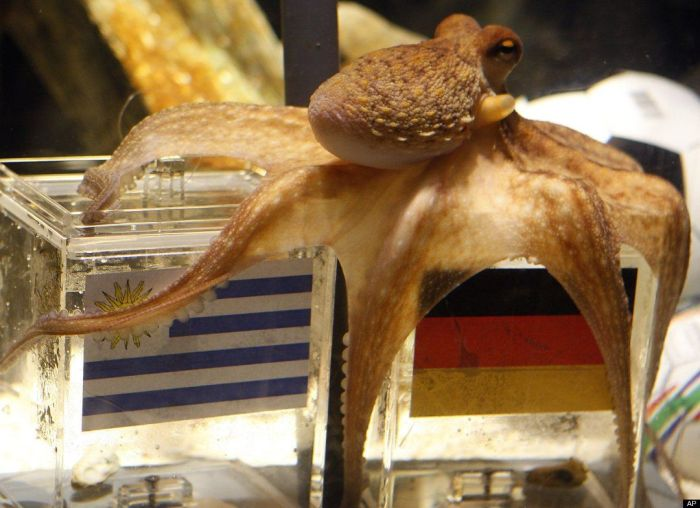 Paul the Octopus Real