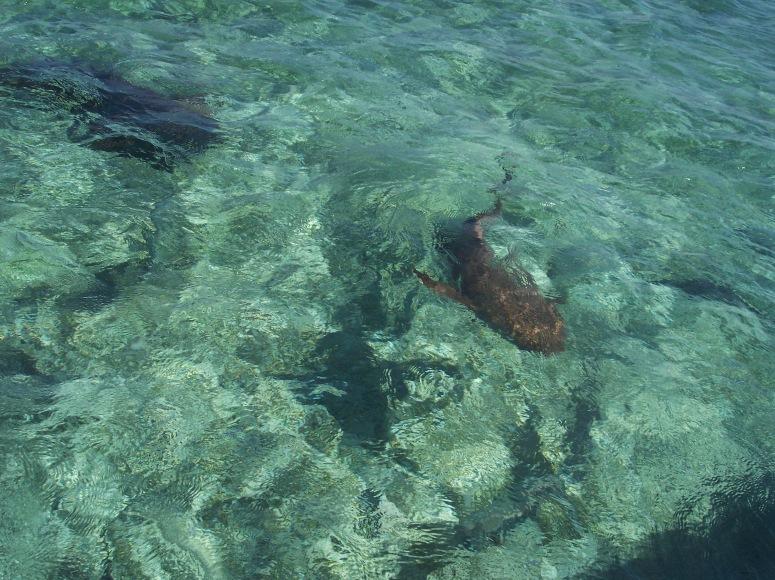 Belize 2006 027