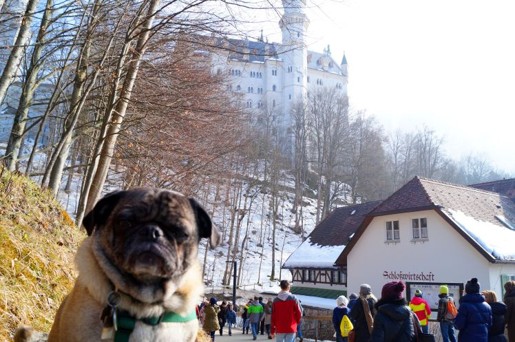Abner from a previous visit to the Disney castle....he wasn't impressed