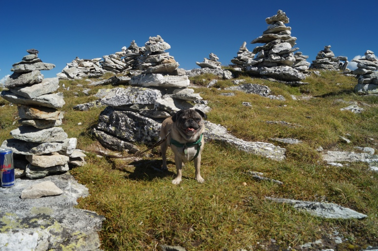 Abner and the stone forest