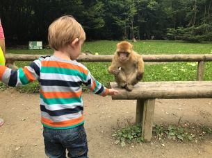 my two-year-old nephew feeding the monkey